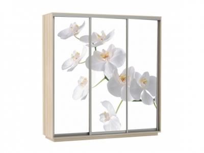 Шкаф-купе Трио Фото Орхидея Ясень шимо светлый